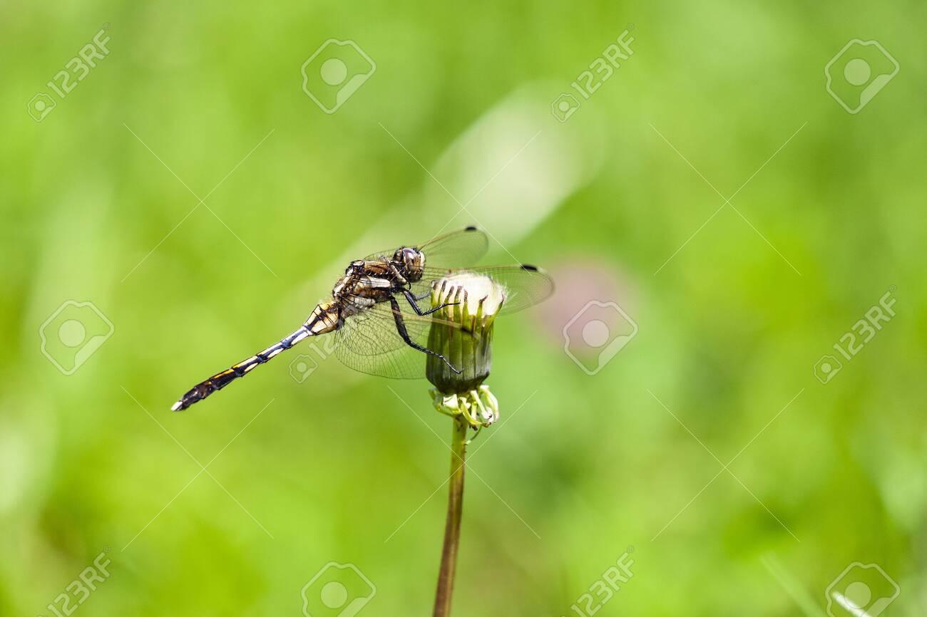 Dragonfly - 138150052