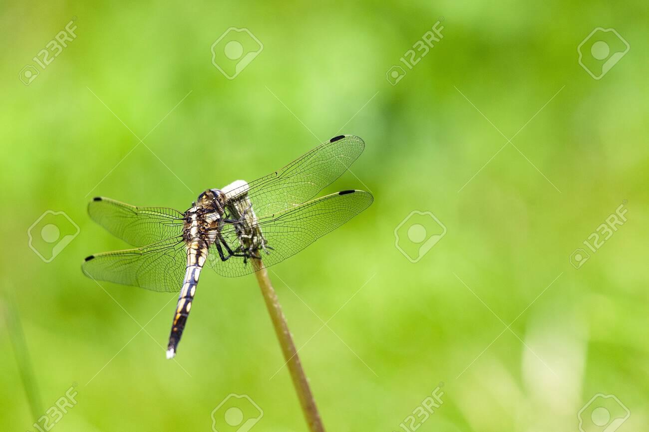Dragonfly - 138150059