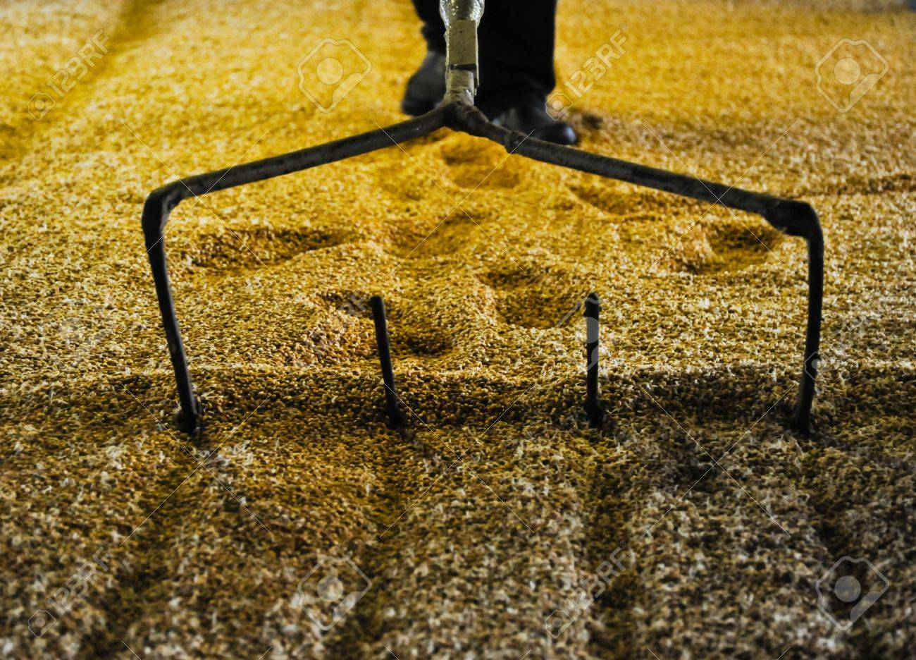 Raking malted barley - 5457201