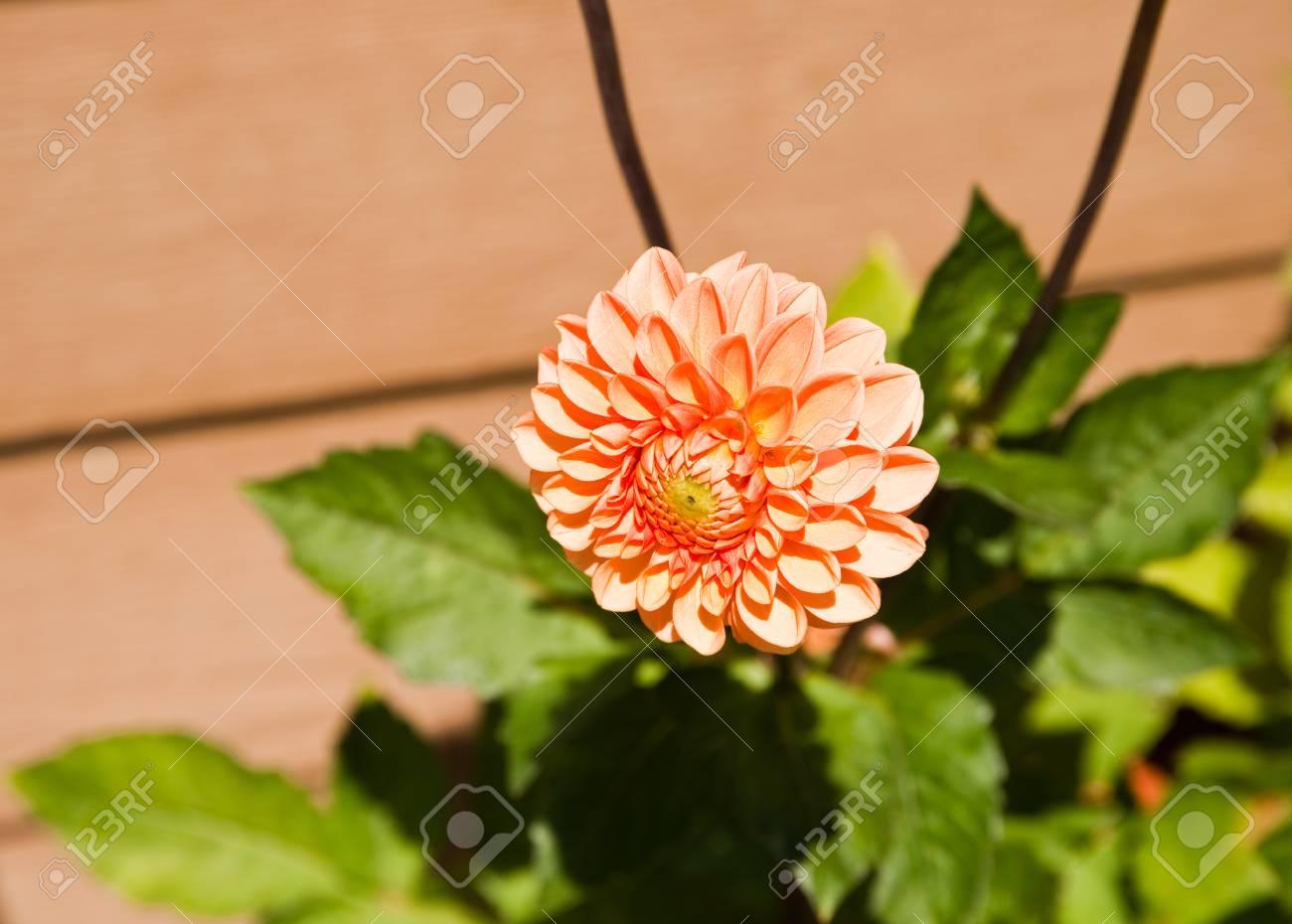 Sunlit flower in a garden - 89407571