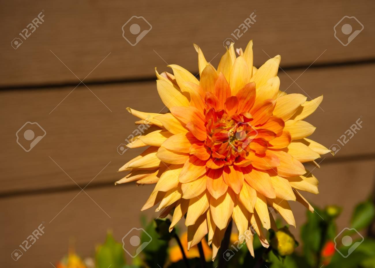 Sunlit flower in a garden - 89407589