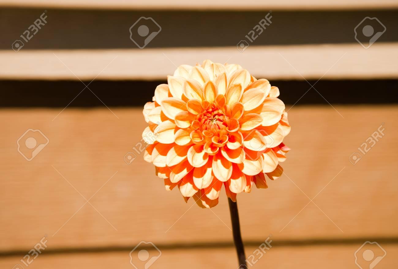 Sunlit flower in a garden - 89407590