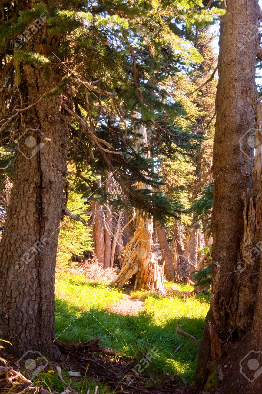 Sunlit trees in a forest - 91620107