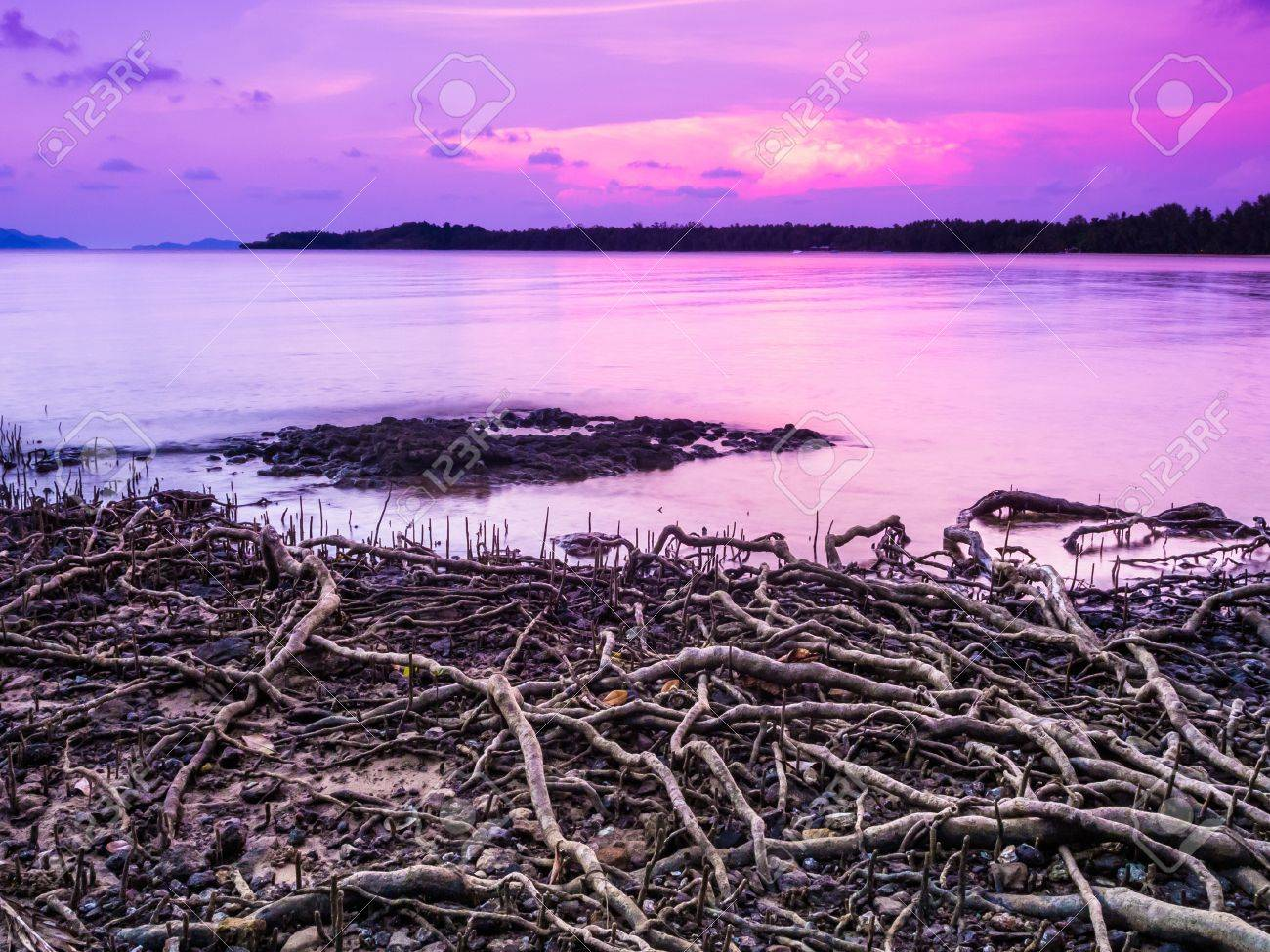 Beach With Roots On Sea Sky Purple Sunset Beach Covered By Stock Photo Picture And Royalty Free Image Image 20884394