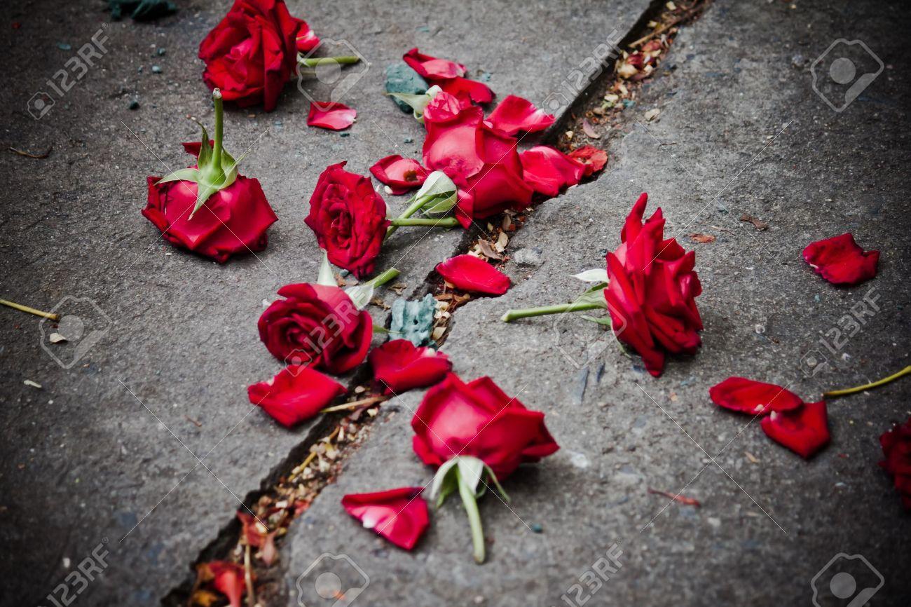 broken rose petals on dirt Stock Photo - 14992216