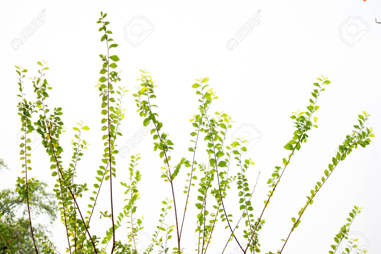 spring tree background Stock Photo - 17898621