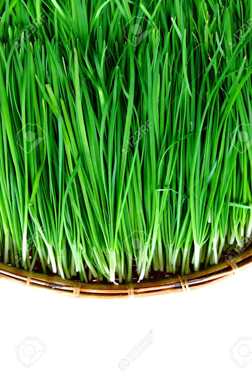 Image result for garlic chives sprouts