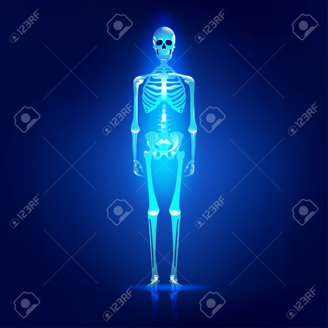 Berühmt Bilder Des Skelettsystems Zeitgenössisch - Anatomie Von ...