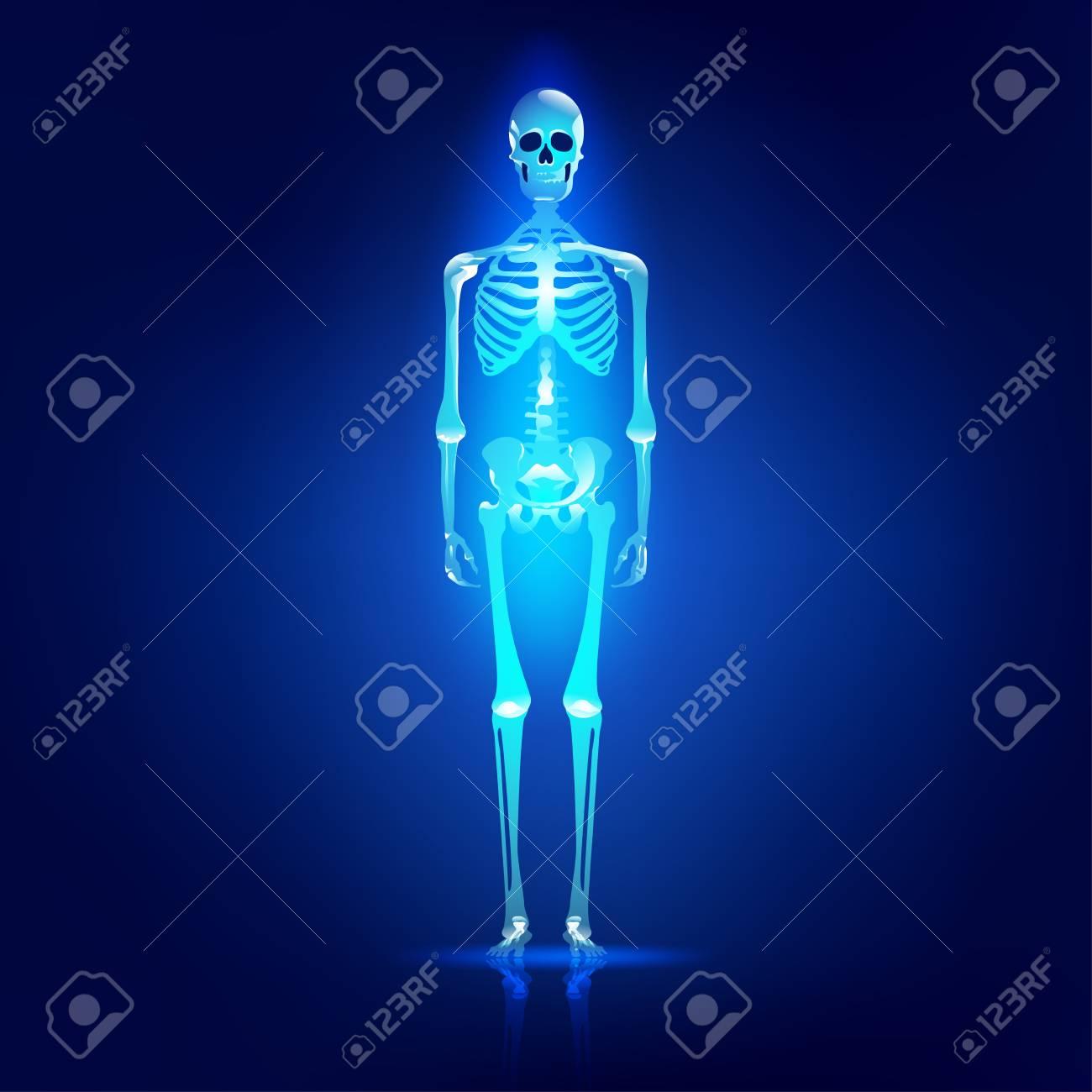 Principales Partes Del Sistema De Esqueleto Humano, Cráneo Brillante ...