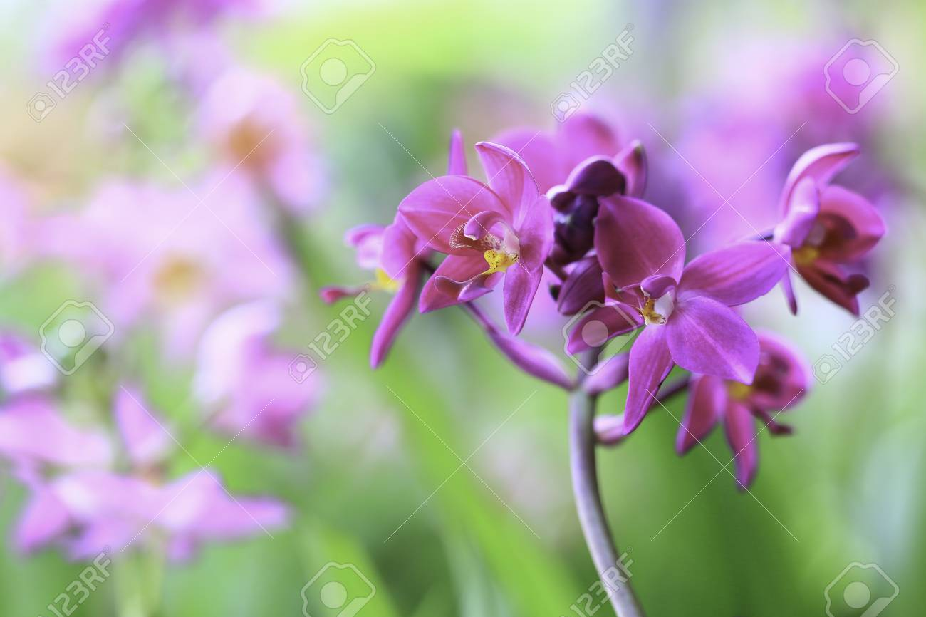 Purple Orchid Flowers Blooming In Nature In The Spring Lizenzfreie
