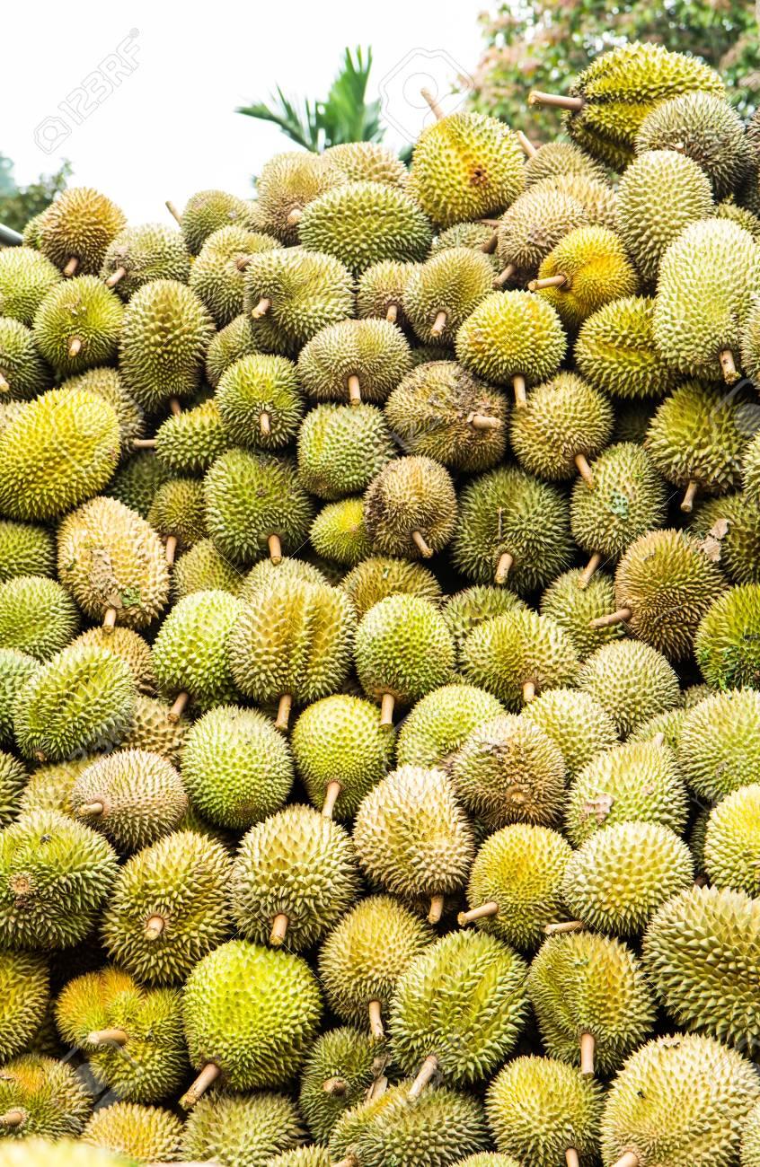 Durian fruit Stock Photo - 14462497