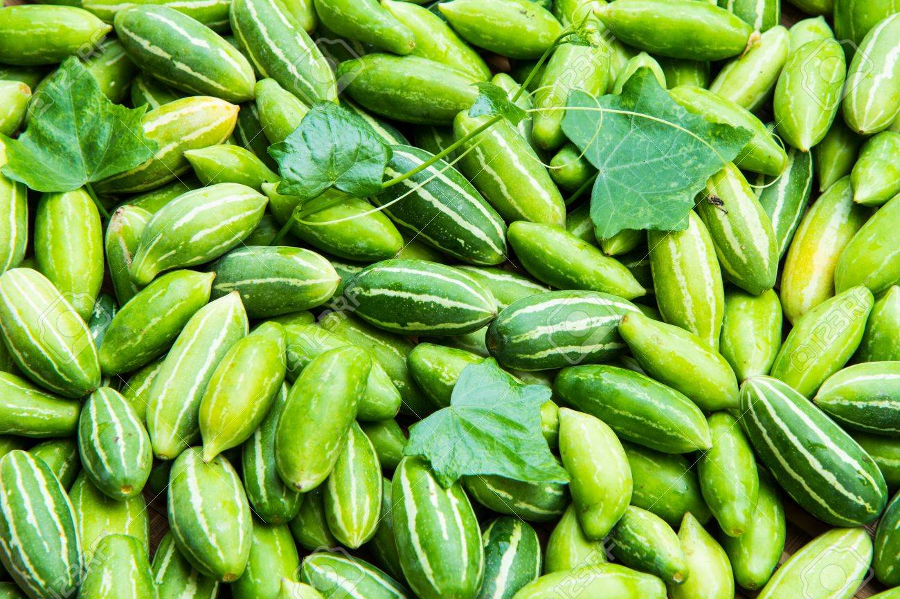 Ivy Gourd Stock Photo - 18049355