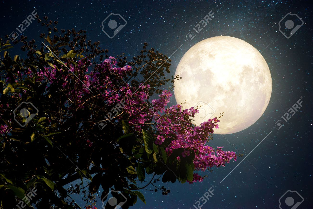 Beautiful cherry blossom sakura flowers with milky way star beautiful cherry blossom sakura flowers with milky way star in night skies full izmirmasajfo