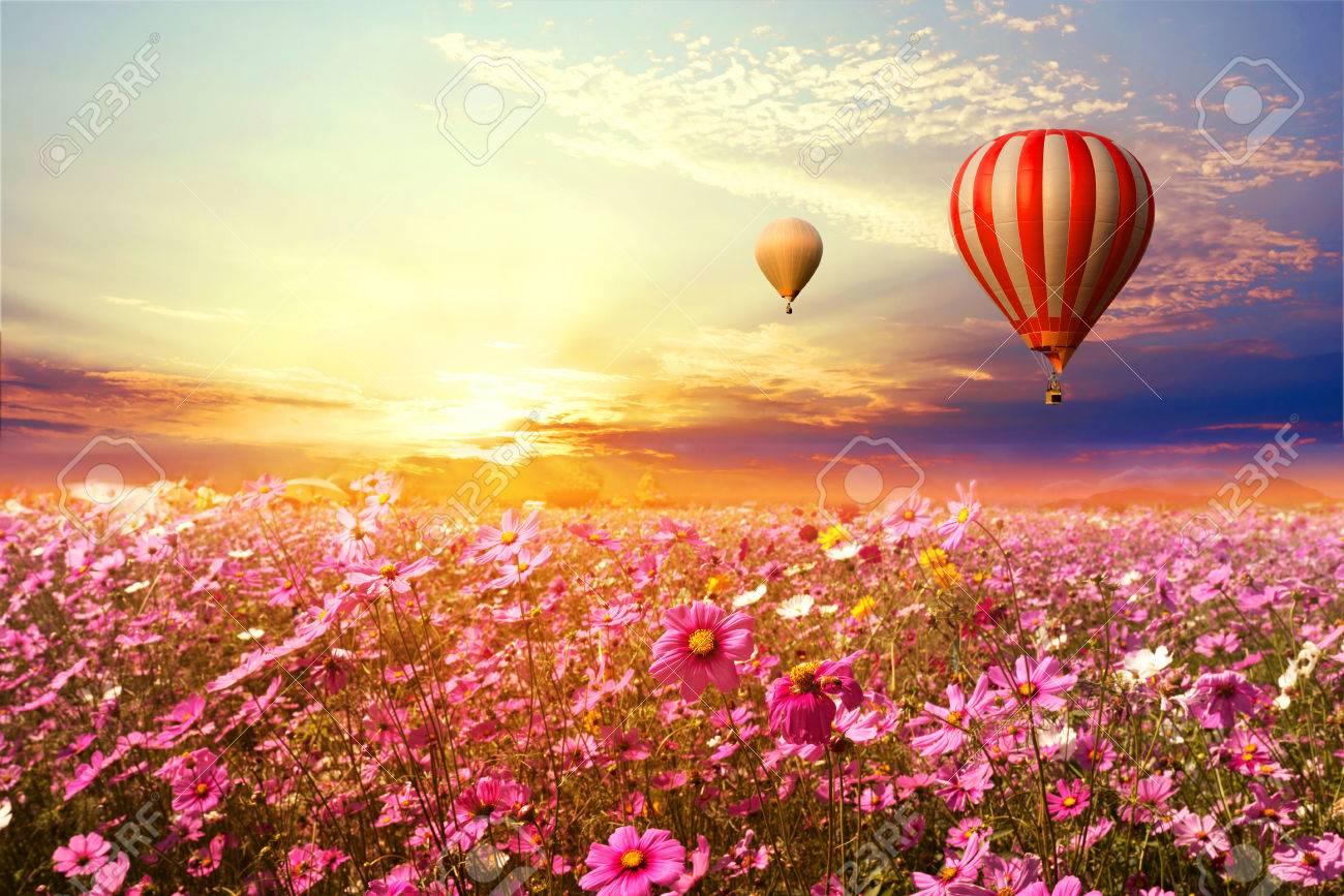Paysage Du Magnifique Champ De Fleurs Du Cosmos Et Ballon A Air