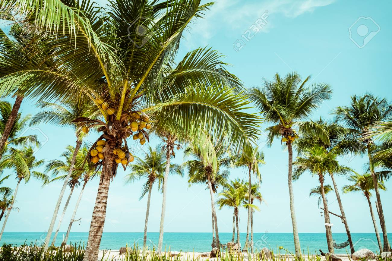 Landscape Of Coconut Palm Tree On Tropical Beach In Summer -.. Stock ...