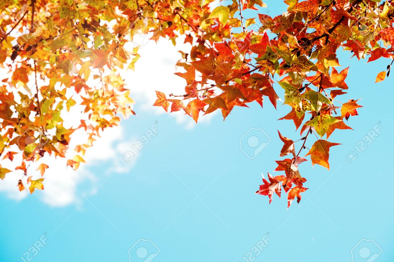 Beautiful Autumn Leaves And Sky Background In Fall Season