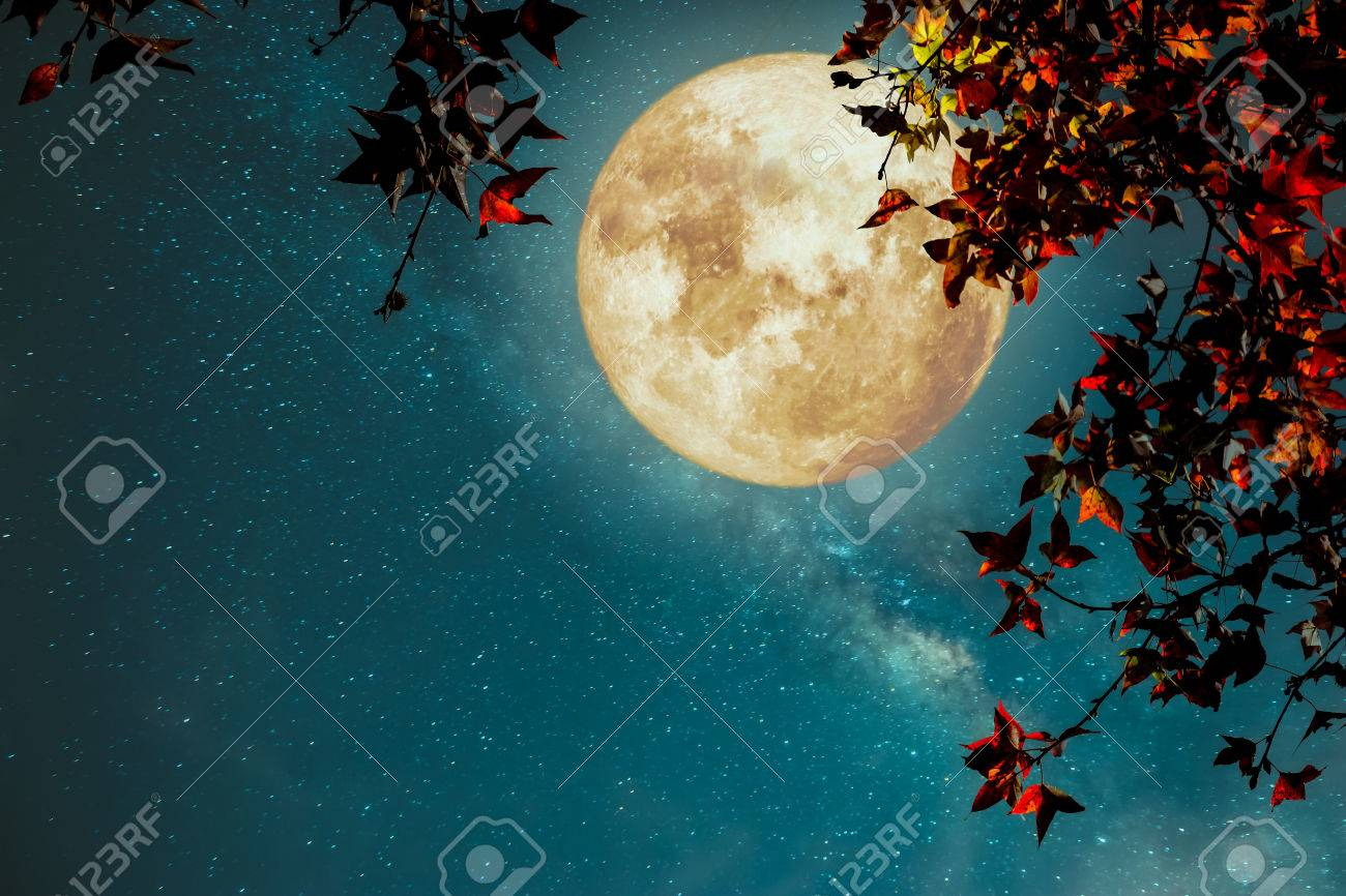 Beautiful autumn fantasy - maple tree in fall season and full moon with milky way star in night skies background. Retro style artwork with vintage color tone - 81645275