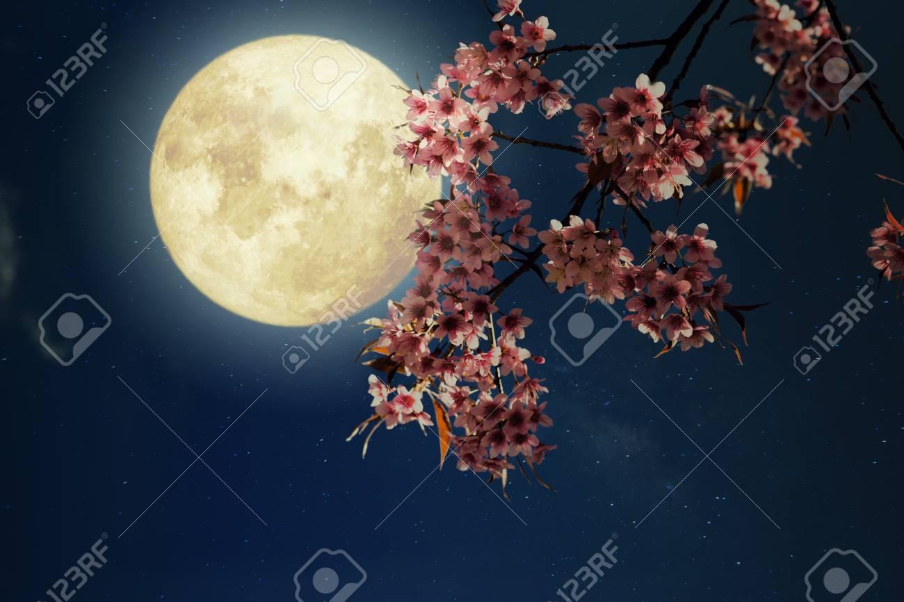 Romantic night scene beautiful cherry blossom sakura flowers romantic night scene beautiful cherry blossom sakura flowers in night skies with full izmirmasajfo