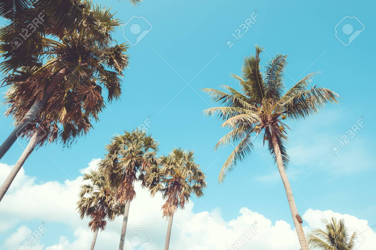 Palm tree on tropical beach with blue sky and sunlight in summer,
