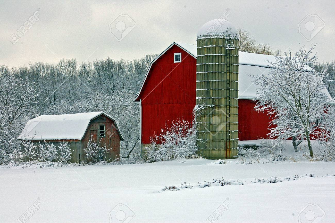Christmas Tree Farm Snow Stock Photos. Royalty Free Christmas Tree ...
