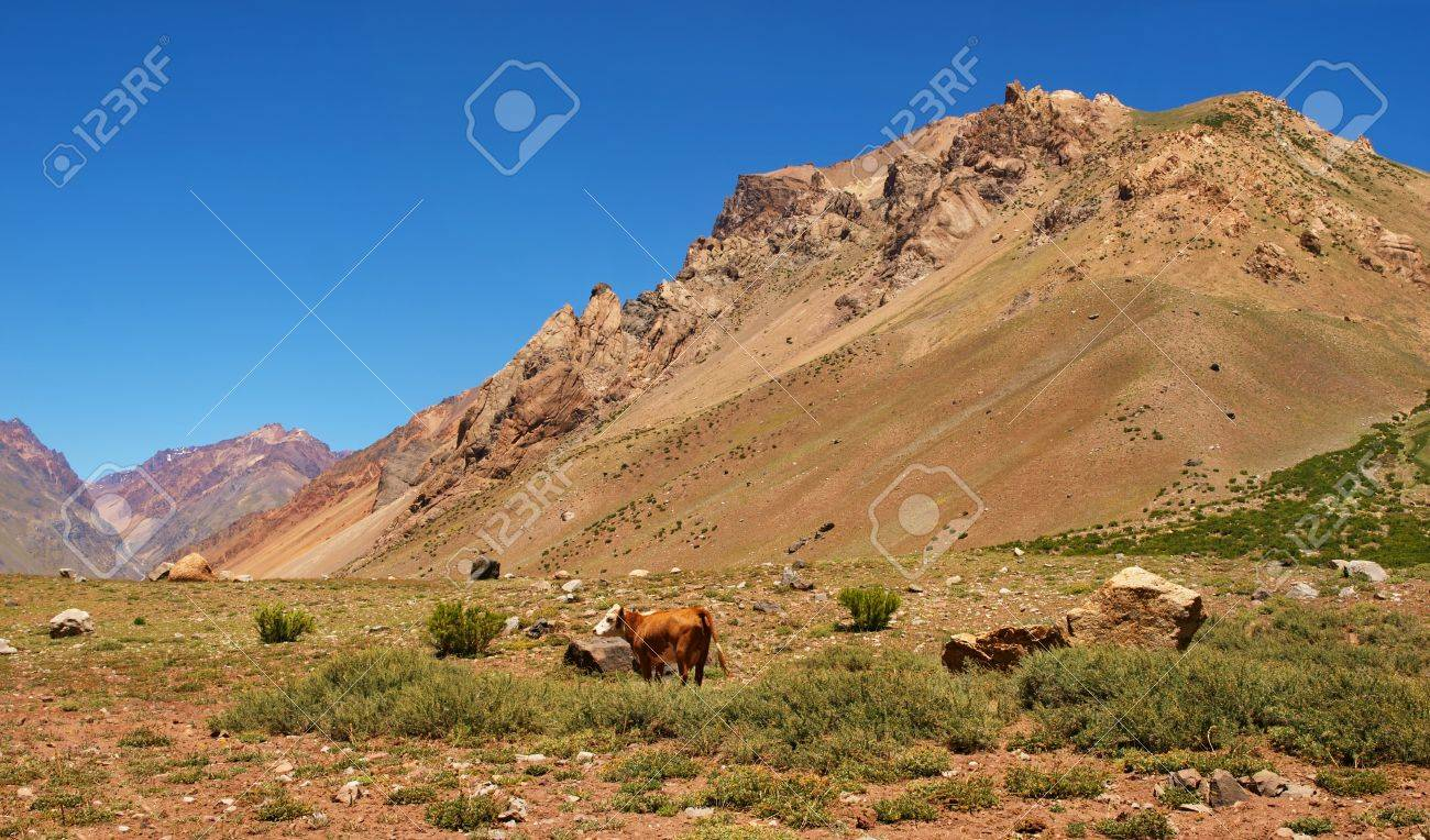 nature landscape with cattle in argentina, south america. Stock Photo - 11295254