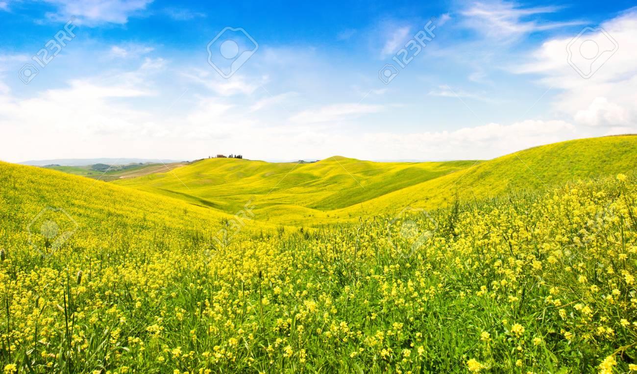 Beautiful tuscany landscape with field of flowers in val d orcia beautiful tuscany landscape with field of flowers in val d orcia italy stock photo izmirmasajfo