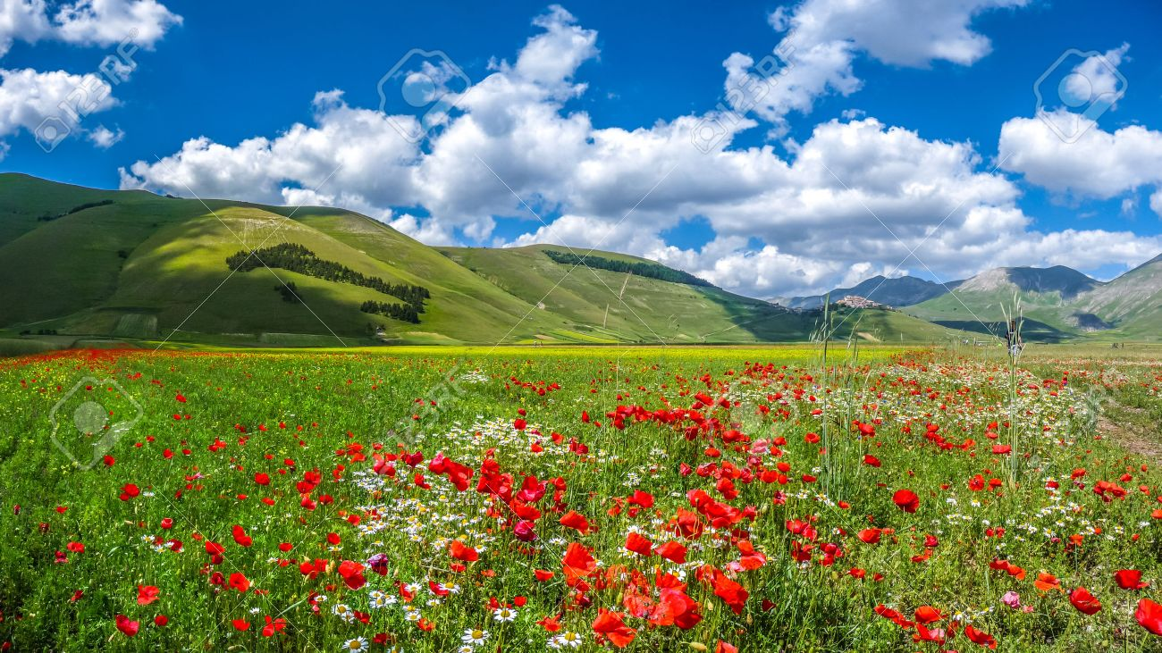 Beautiful summer landscape at Piano Grande Great Plain mountain plateau in the Apennine Mountains, Castelluccio di Norcia, Umbria, Italy Stock Photo - 43250744