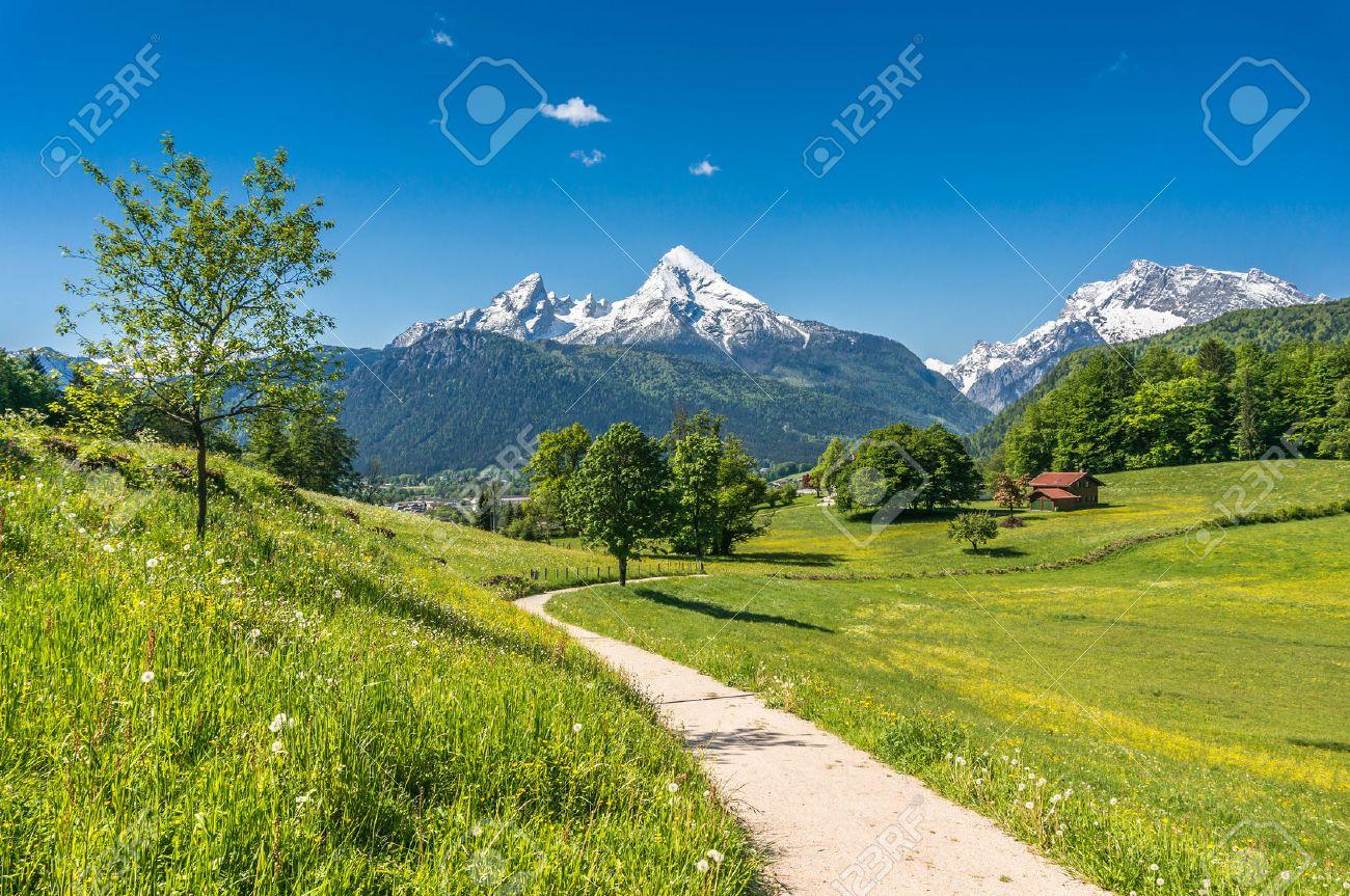 paisajes con flores paisaje de verano idlico en los alpes con frescos pastos de montaa