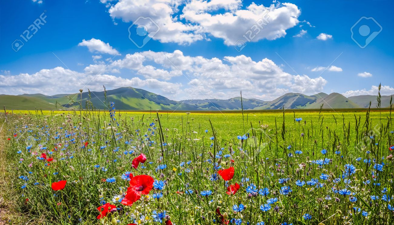 Beau paysage d'été au Piano Grande Grande Plaine du plateau de montagne dans les Apennins, Castelluccio di Norcia, Ombrie, Italie Banque d'images - 46642708