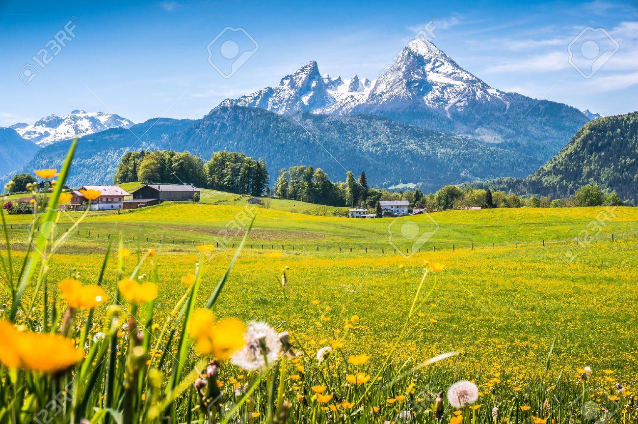 paysage idyllique dans les Alpes avec des prairies vertes fraîches, fleurs épanouies, fermes typiques et sommets des montagnes enneigées en arrière-plan, Nationalpark Berchtesgaden, Bavière, Allemagne Banque d'images - 49066502