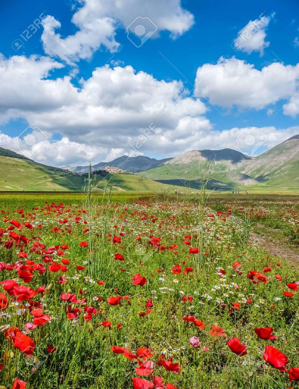 Beau paysage d'été au Piano Grande Grande Plaine du plateau de montagne dans les Apennins, Castelluccio di Norcia, Ombrie, Italie Banque d'images - 49066383