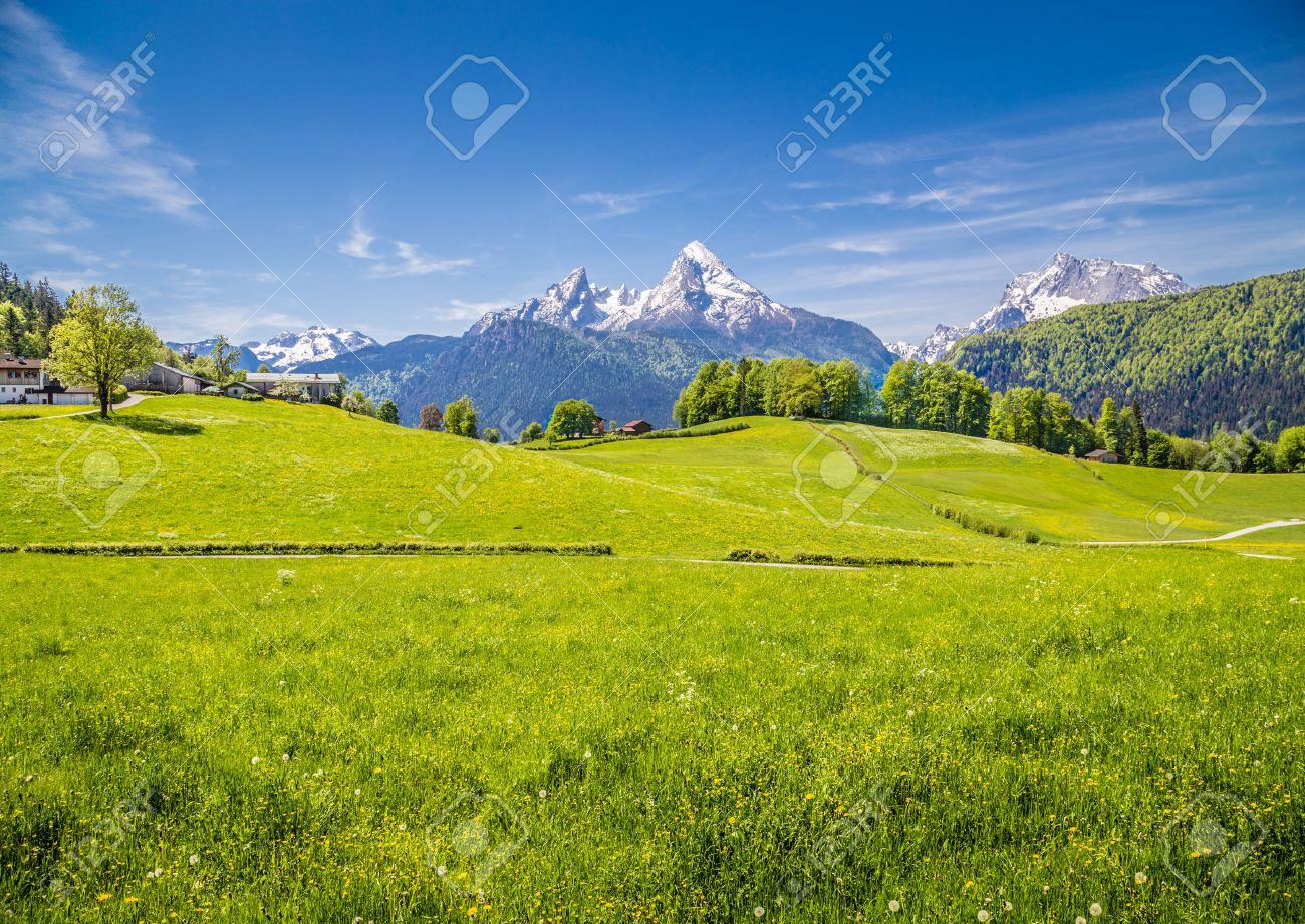 Paysage idyllique dans les Alpes avec des prairies vertes fraîches et fleurs épanouies et les sommets des montagnes enneigées en arrière-plan, Nationalpark Berchtesgaden, Bavière, Allemagne Banque d'images - 49003010