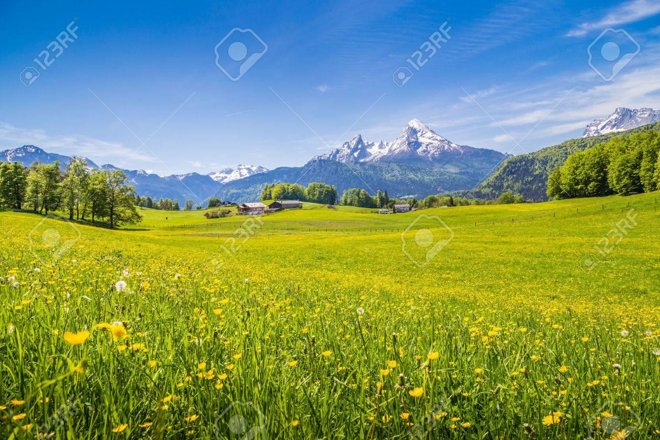 Paysage idyllique dans les Alpes avec des prairies vertes fraîches et fleurs épanouies et les sommets des montagnes enneigées en arrière-plan Banque d'images - 49066488