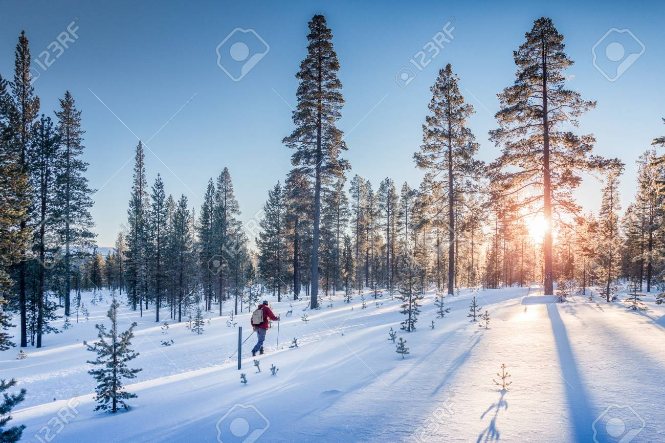 Panoramic view of man cross-country skiing on a track in beautiful winter wonderland scenery in Scandinavia with scenic evening light at sunset in winter, northern Europe - 95450920