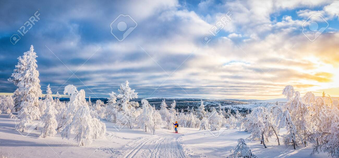 Panoramic view of young man cross-country skiing on a track in beautiful winter wonderland scenery in Scandinavia with scenic evening light at sunset in winter, northern Europe - 119003445