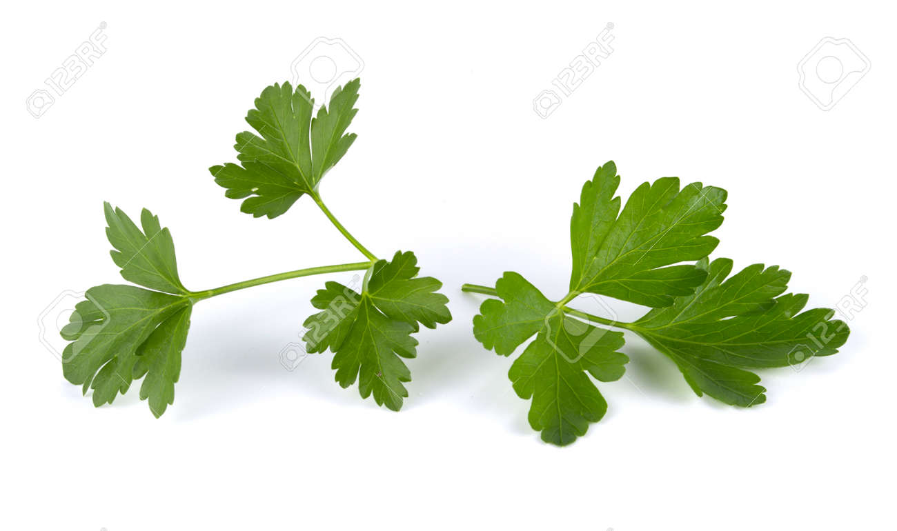 Fresh green leaves of parsley isolated on white background - 156041359