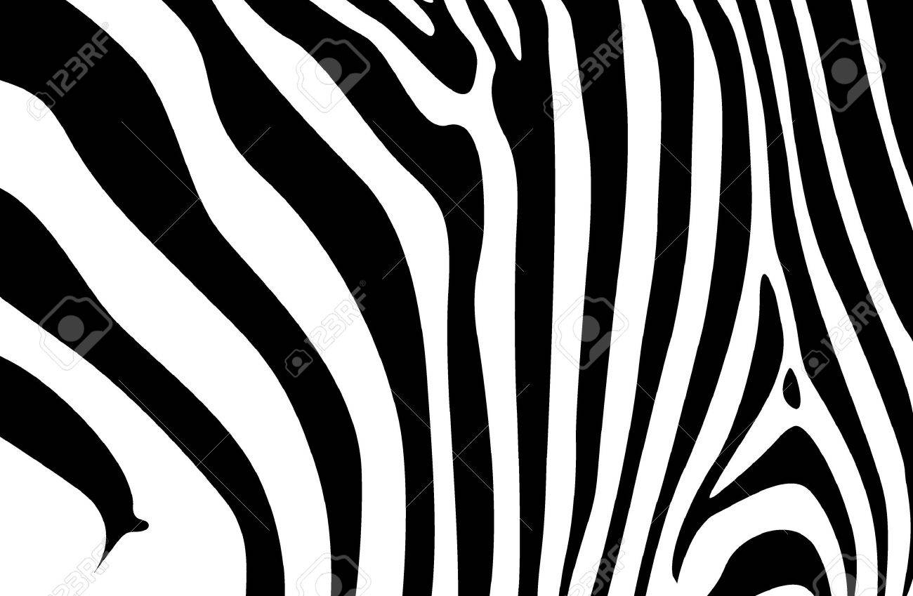 Zebra Prints Patterns zebra  zebra  print  stripes