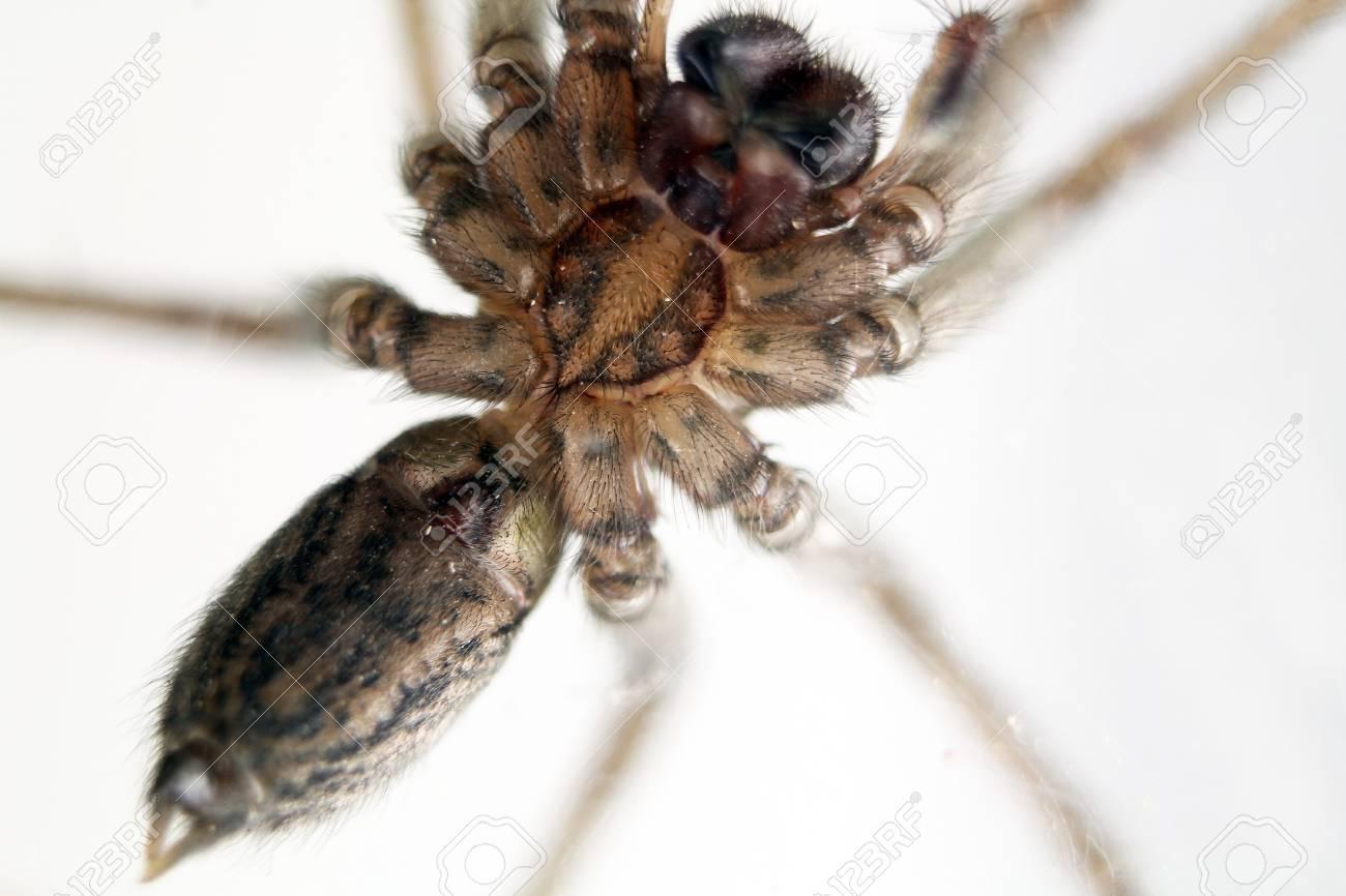 domestic spider stalking prey Stock Photo - 12350309