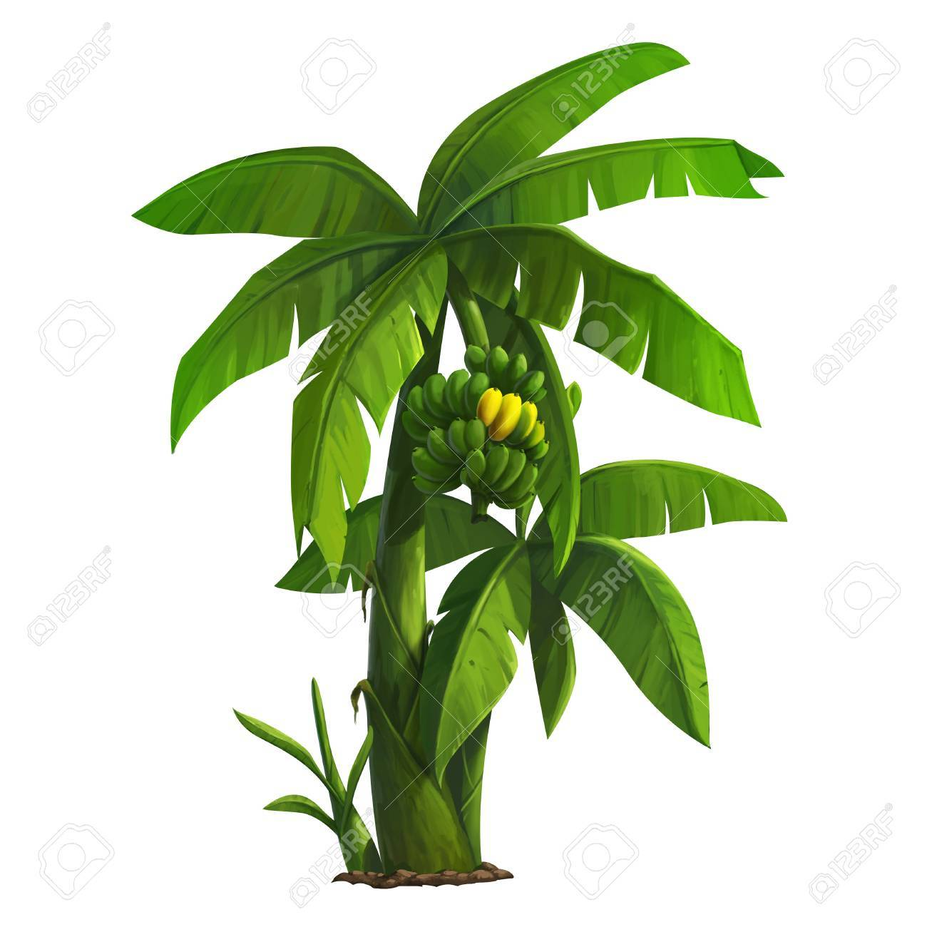Illustration Of Banana Tree And Ripening Bananas Stock Photo Picture And Royalty Free Image Image 46526667