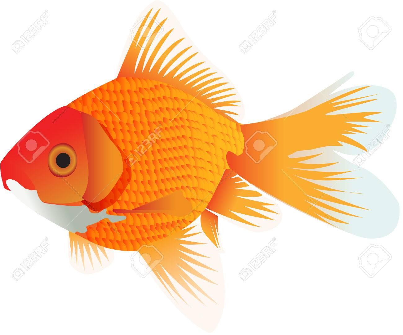 金魚イラストのイラスト素材ベクタ Image 76349190