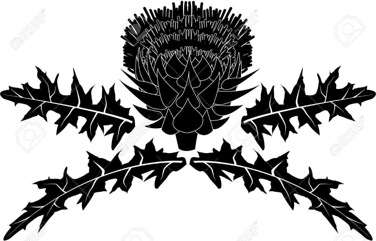 thistle with leaves - 78260740