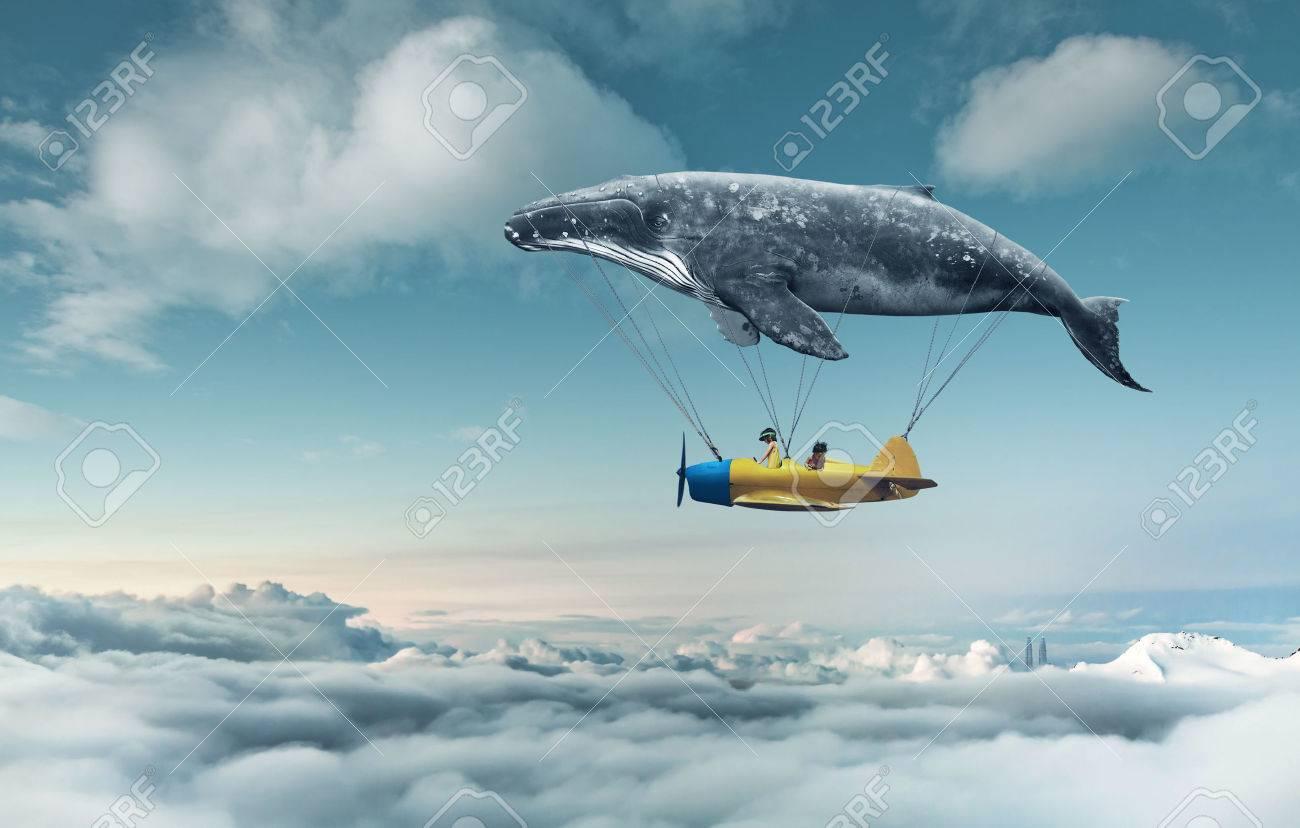 Take me to the dream - 43348212
