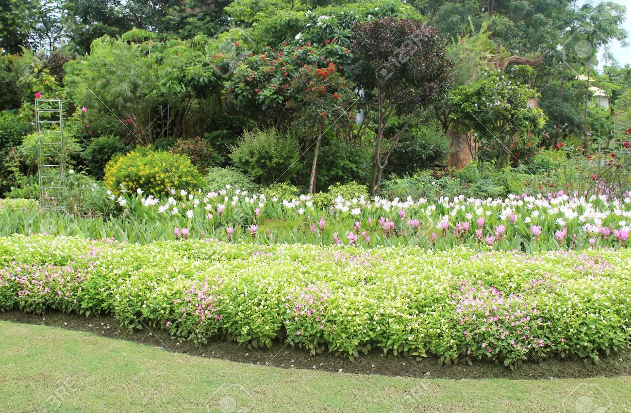 Luxuriant Jardin Paysager Avec Parterre Et Colorées Plantes Banque D ...