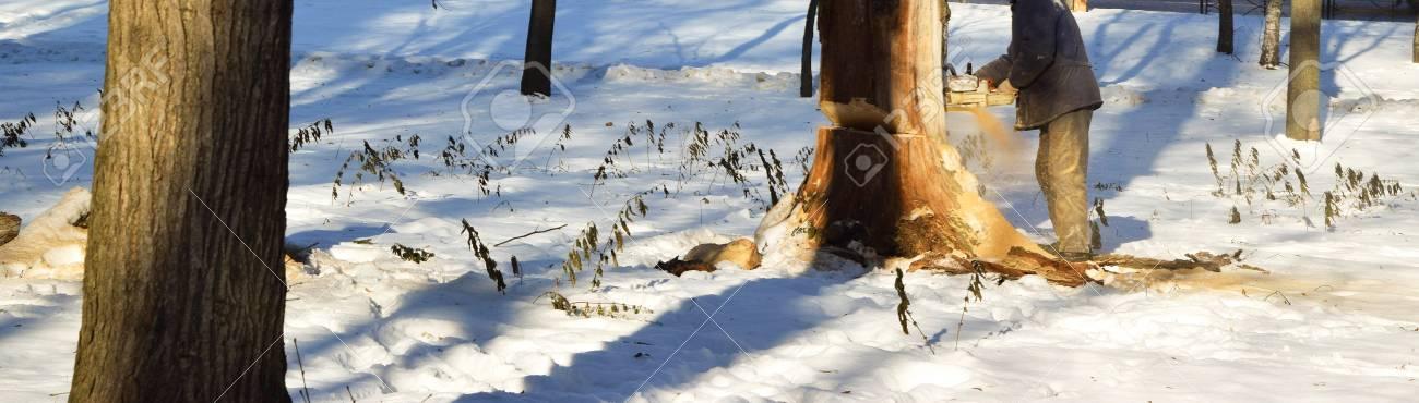 Schneiden Sie Den Trockenen Baum Mit Einer Kettensage Im Winter Nach