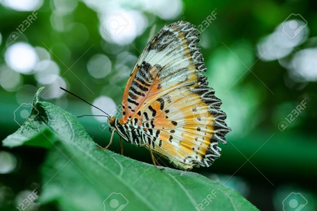 Ein Tiger Schmetterling Futterung Auf Grunem Blatt In Einem