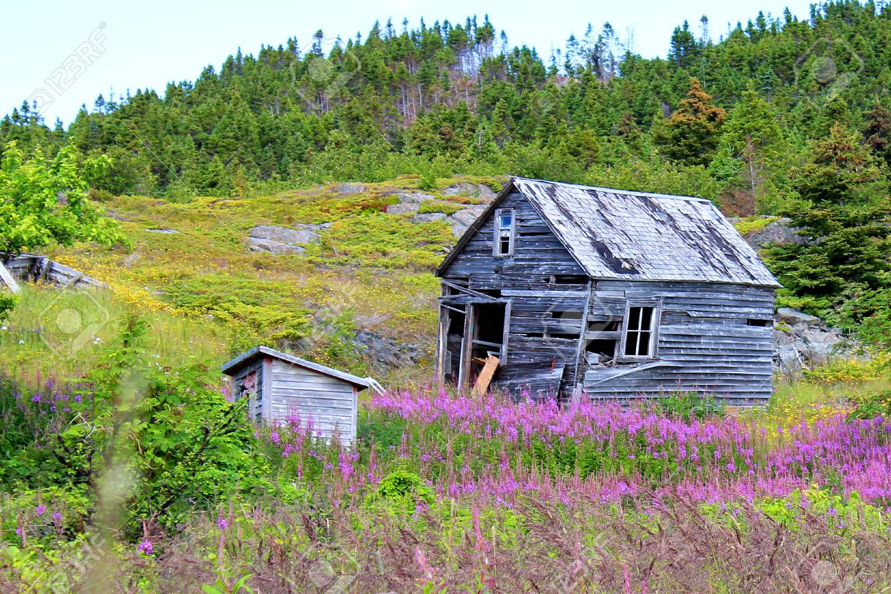 Old sheds in a meadow