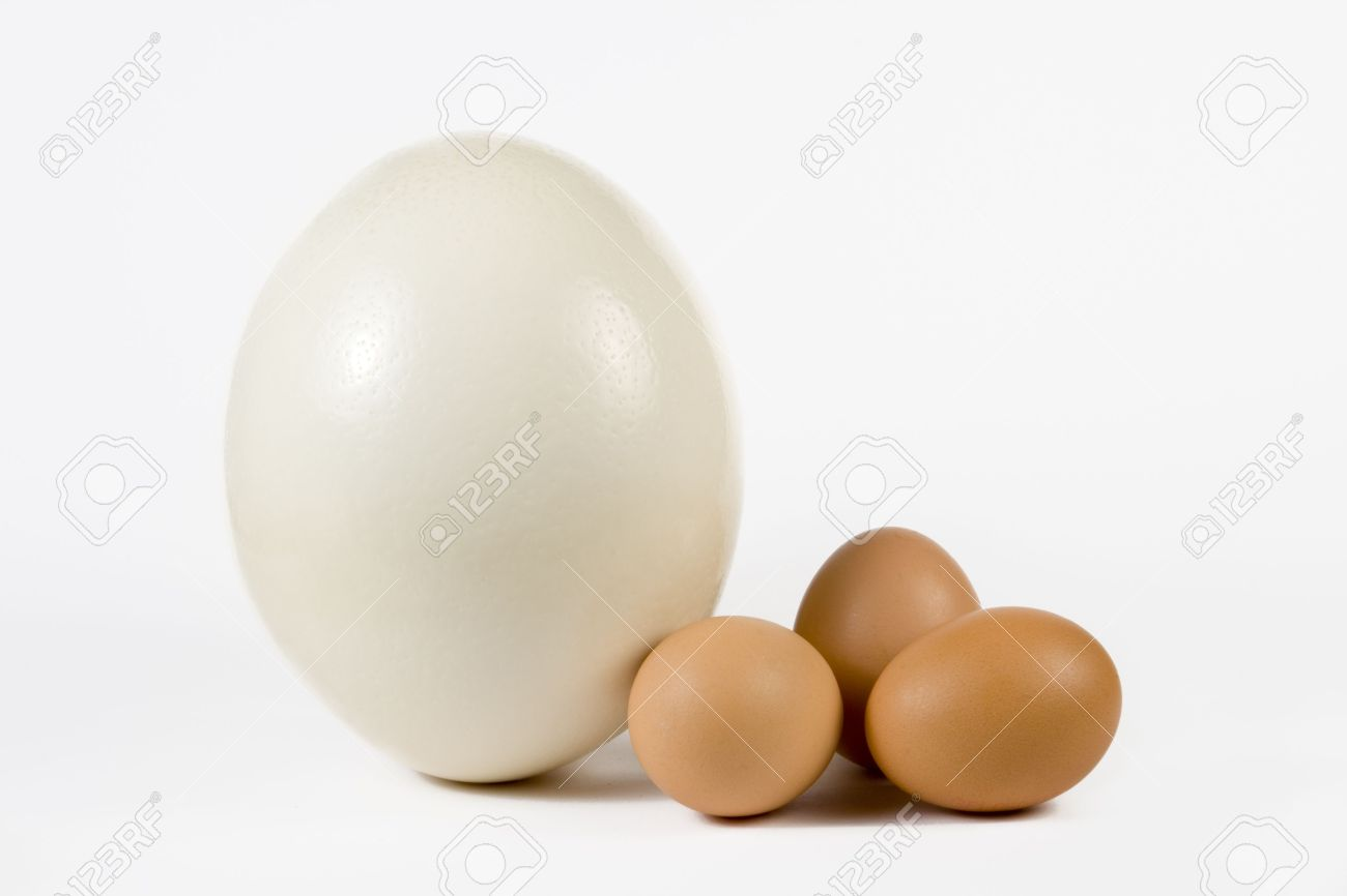 Ostrich Egg And Hen Eggs. The Size Comparing. Stock Photo, Picture ...