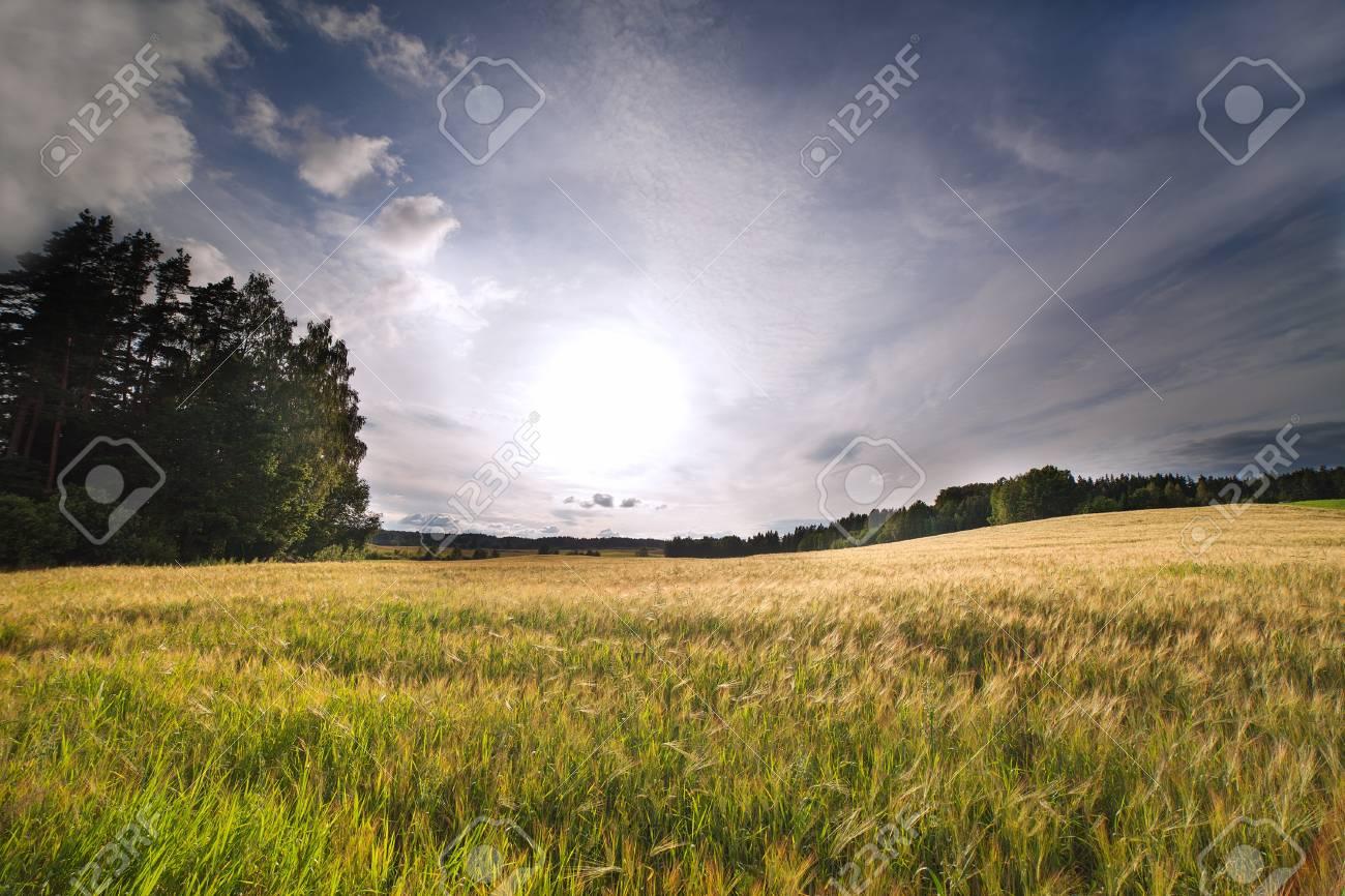 Rural landscape in summertime Stock Photo - 17022936