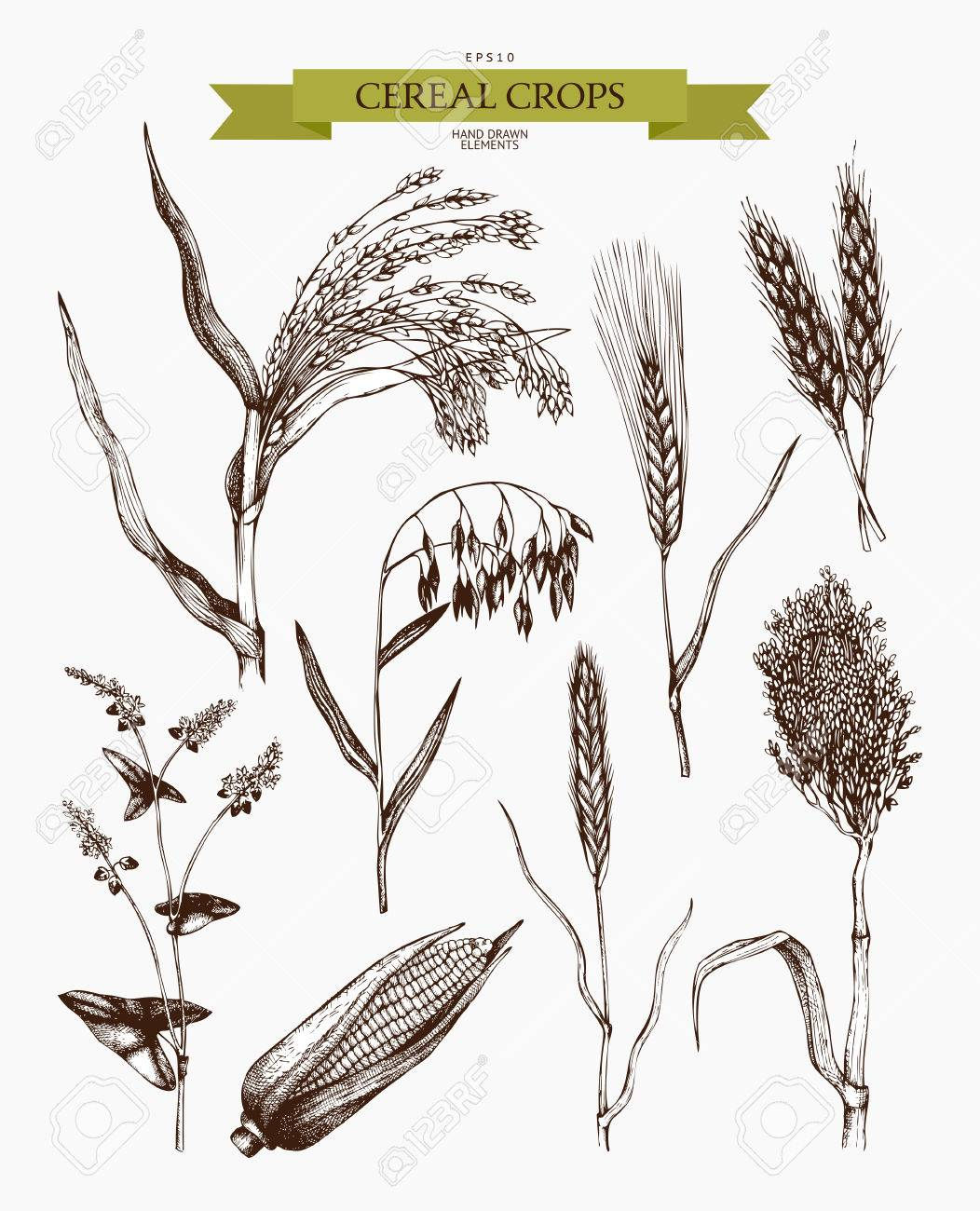 Hand drawn agricultural plants sketches. - 75320445