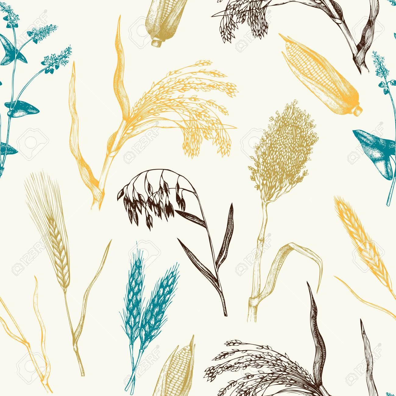 Vector pattern with hand drawn cereal crops - 75083857